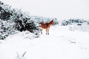 Poulains de Colipain - crève hivernale